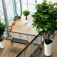 Corporate Plants