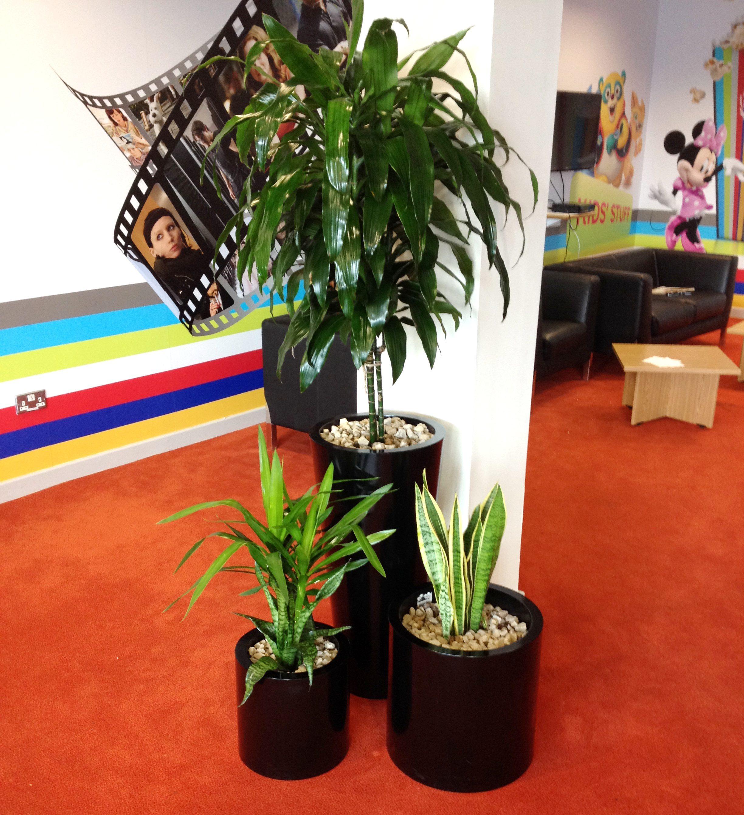 Office Plants Flowers Forever The Designer Florist